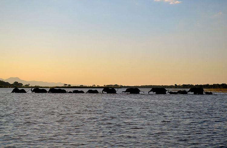 malawi national parks elephants-liwonde-national-park-national-parks-adventures-malawian-style-lake-holidays-specialist-tour-operator-malawi