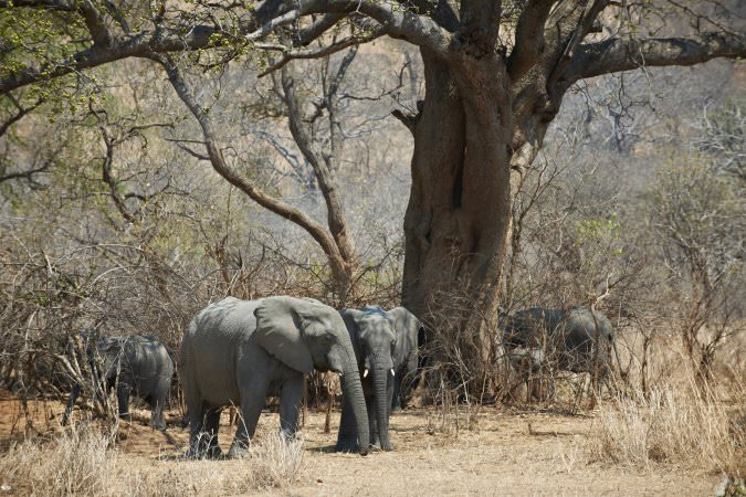 wildlife reserves malawi wildlife-reserves-vwaza-marsh-malawian-style-holidays-specialist-tour-operator-malawi-zambia-mozambique