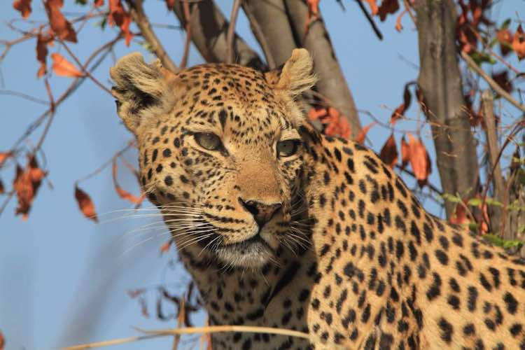 travel-report-botswana-blog-malawian-style-wildlife