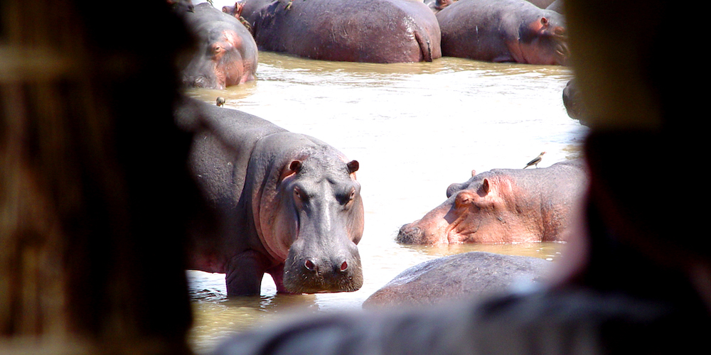 travel-report-south-luangwa-august-blog-malawian-style-Hippo-Hide