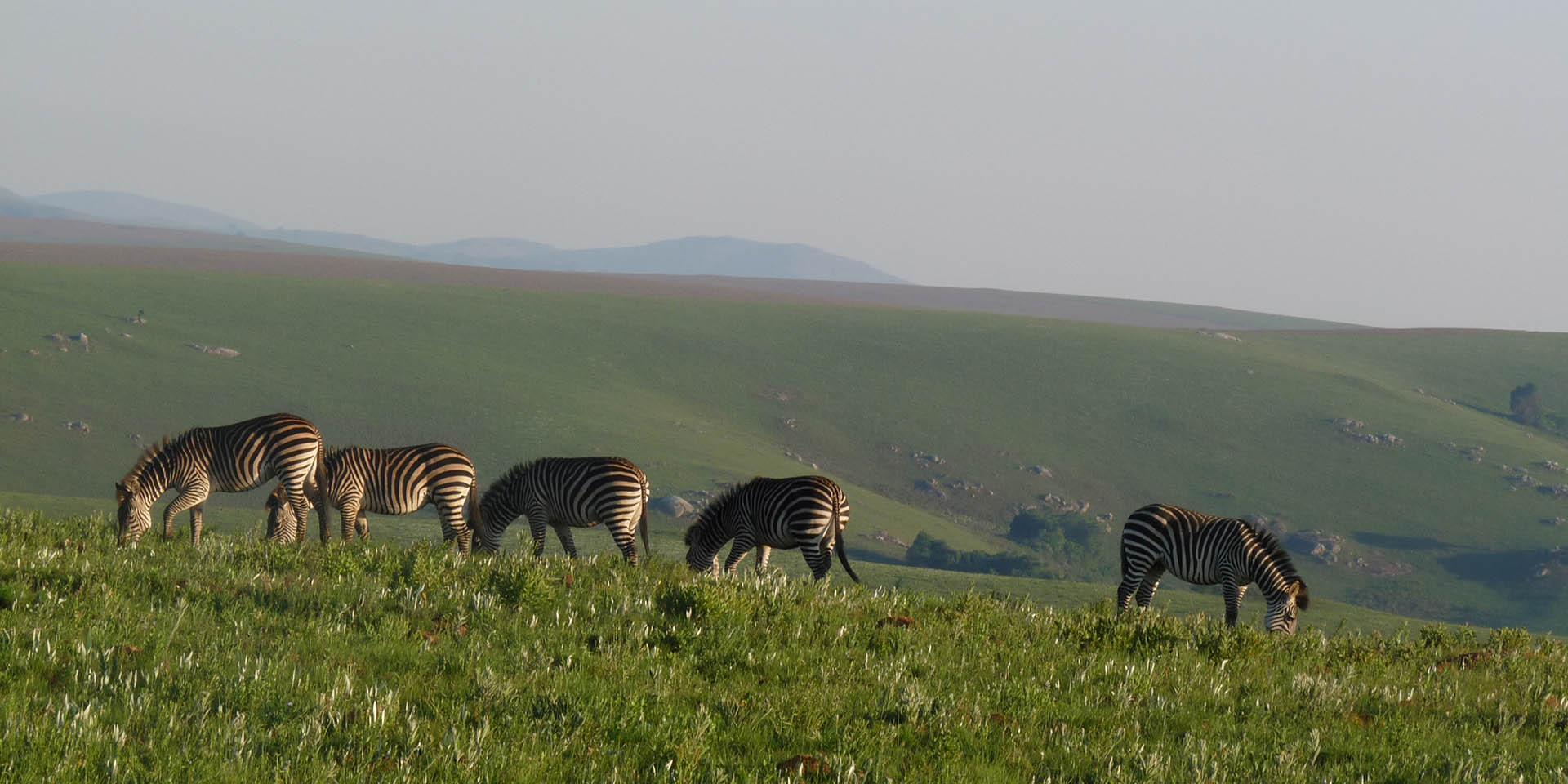 northern-explorer-7-nights-bush-beach-safaris-tours-malawian-style-malawi-adventures-experiences-specialist-tour-operator-zebra-nyika