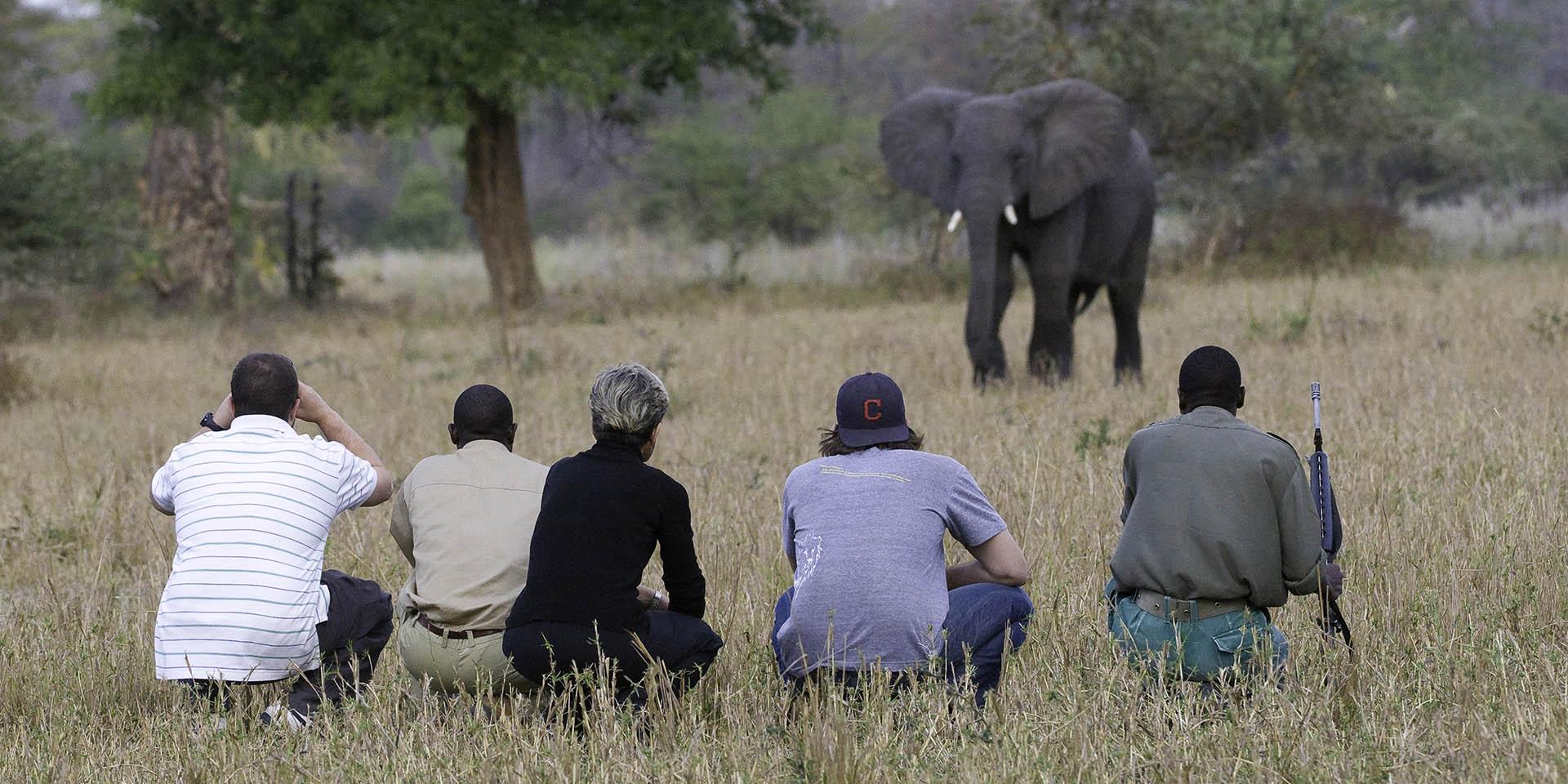 southern explorer 7 nights bush-beach-safaris-tours-malawian-style-malawi-adventures-experiences-specialist-tour-operator-mvuu-walking-safari-liwonde