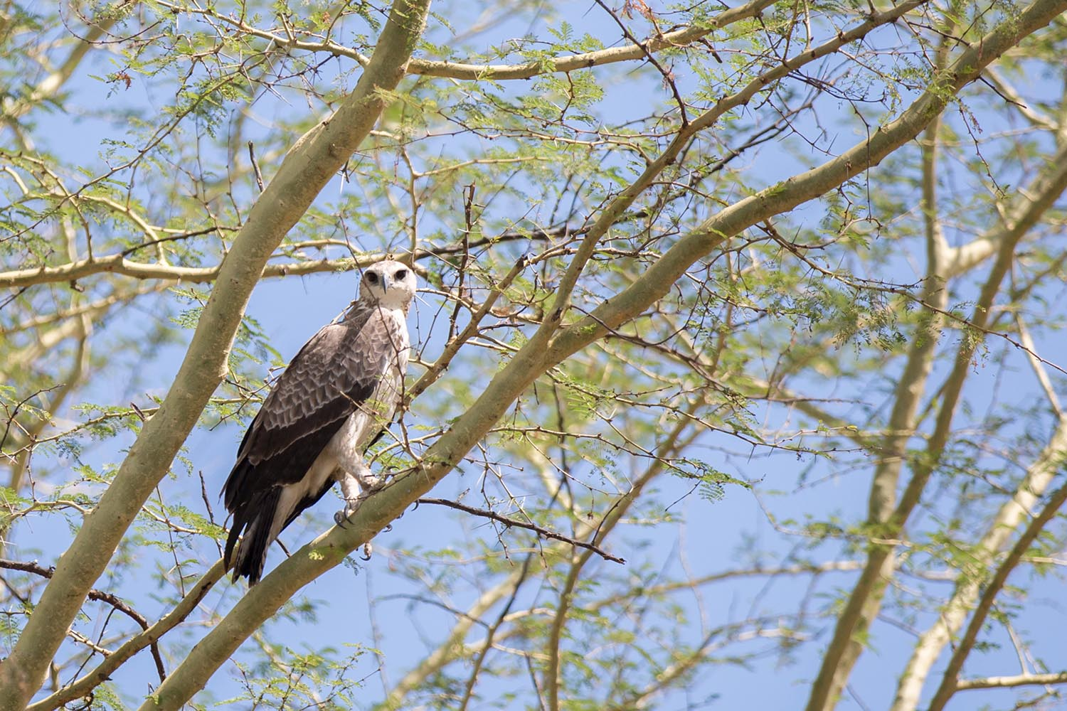 liwonde national park malawian-style-malawi-adventures-experiences-holidays-specialist-tour-operator-malawi-national-parks-reserves-birding