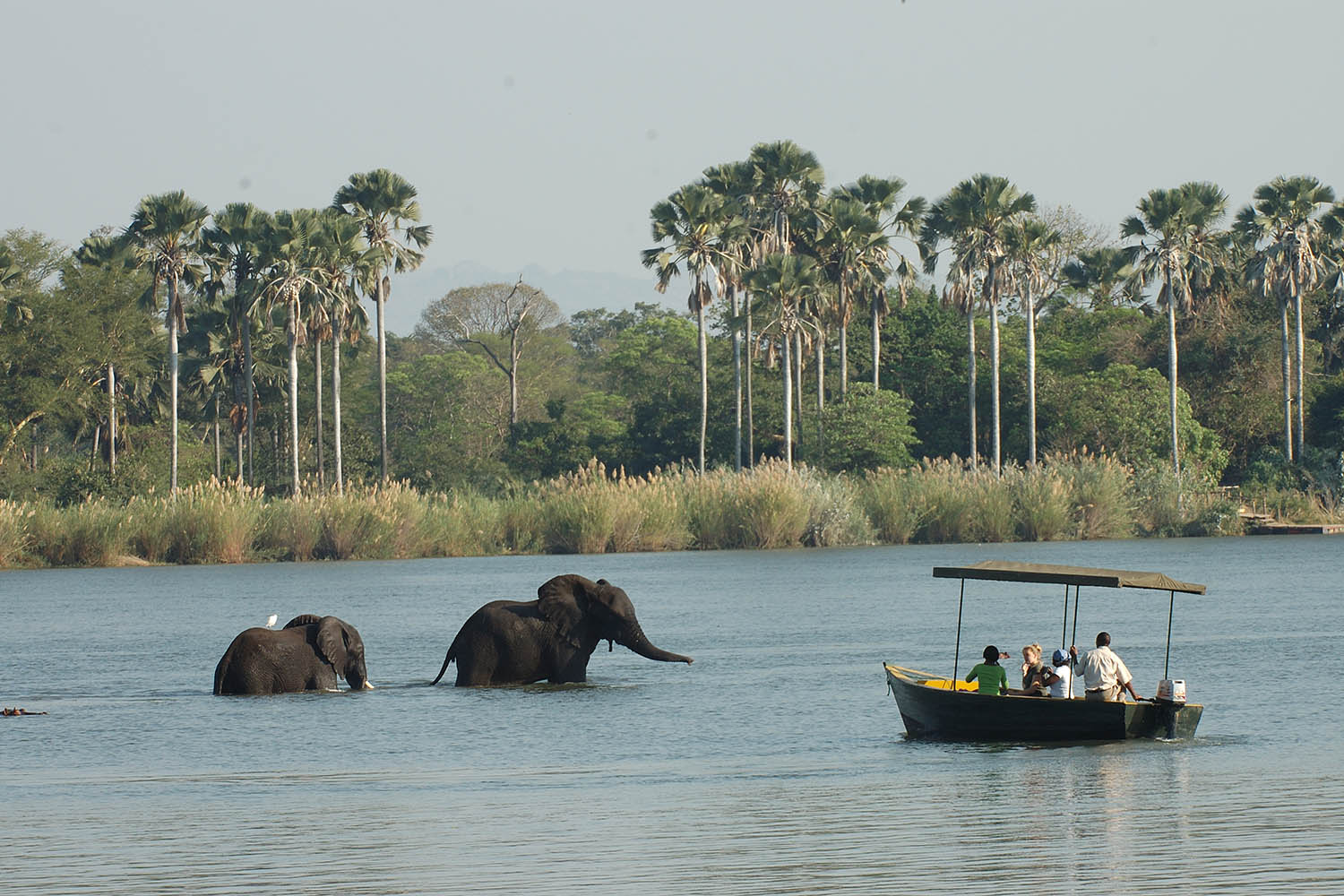 liwonde national park malawian-style-malawi-adventures-experiences-holidays-specialist-tour-operator-malawi-national-parks-reserves-boat-safari
