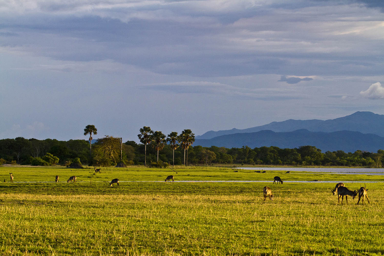 liwonde national park malawian-style-malawi-adventures-experiences-holidays-specialist-tour-operator-malawi-national-parks-reserves-wildlife