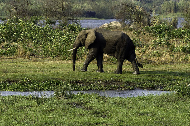 majete wildlife reserve malawi-national-parks-reserves-malawian-style-malawi-adventures-experiences-specialist-tour-operator-elephantmajete-wildlife-reserve-malawi-national-parks-reserves-malawian-style-malawi-adventures-experiences-specialist-tour-operator-elephant