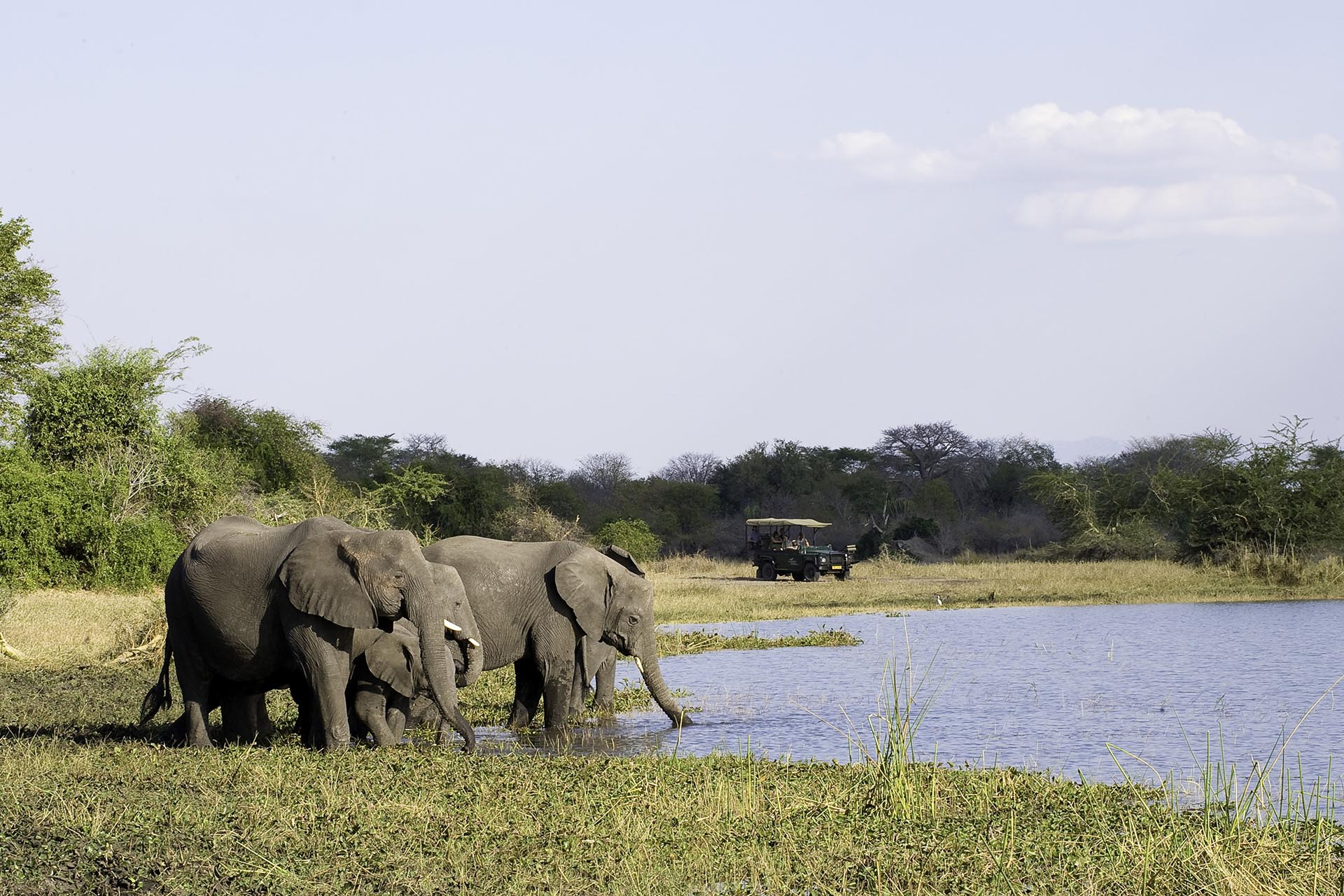 mount mulanje tours-malawian-style-malawi-adventures-experiences-specialist-tour-operator-mvuu-game-drive-elephants