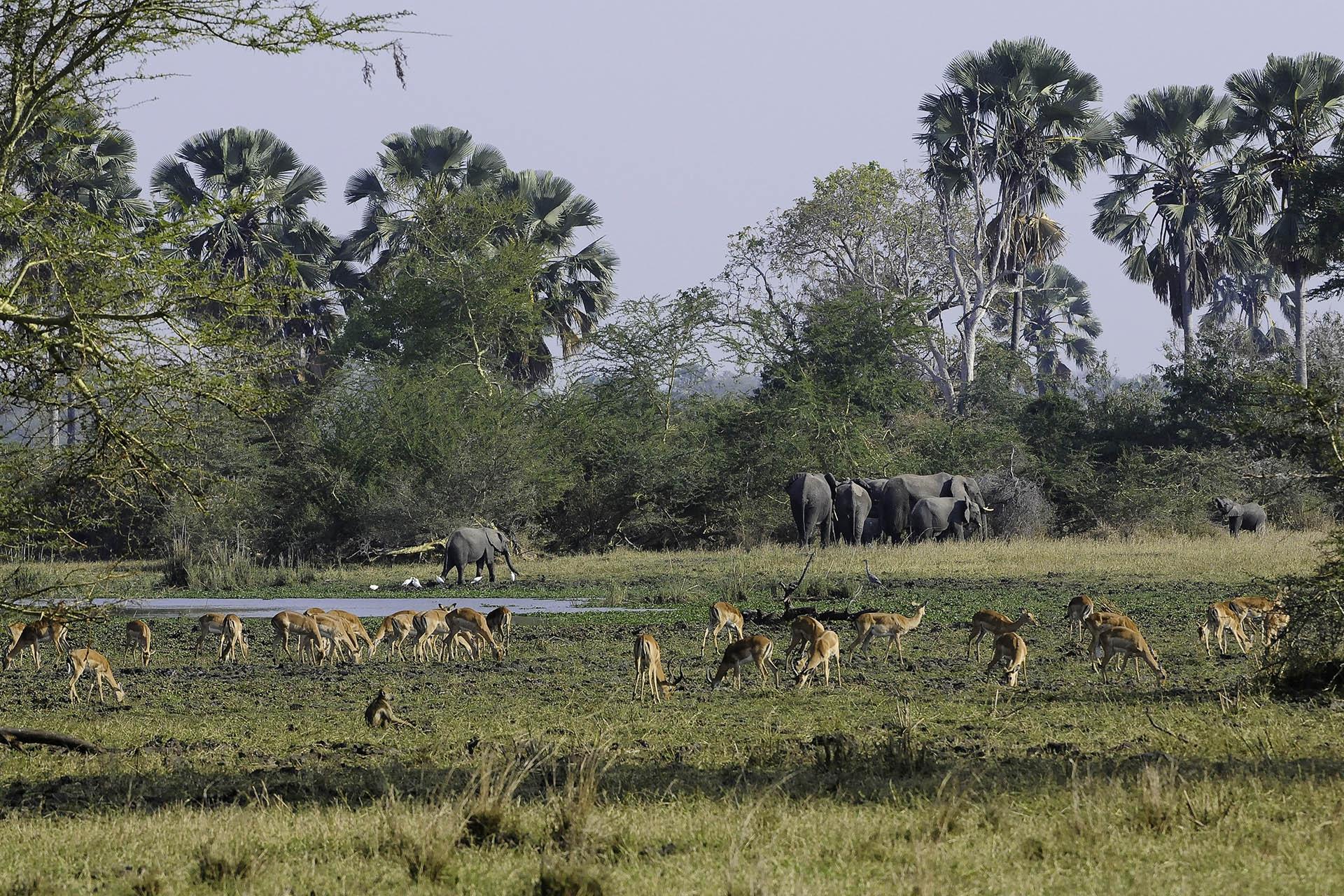mount mulanje tours-malawian-style-malawi-adventures-experiences-specialist-tour-operator-mvuu-landscape-elephants
