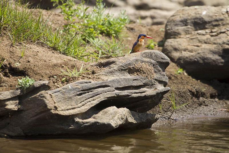 nkhotakota wildlife reserve malawi-national-parks-reserves-malawian-style-malawi-adventures-experiences-specialist-tour-operator-birding