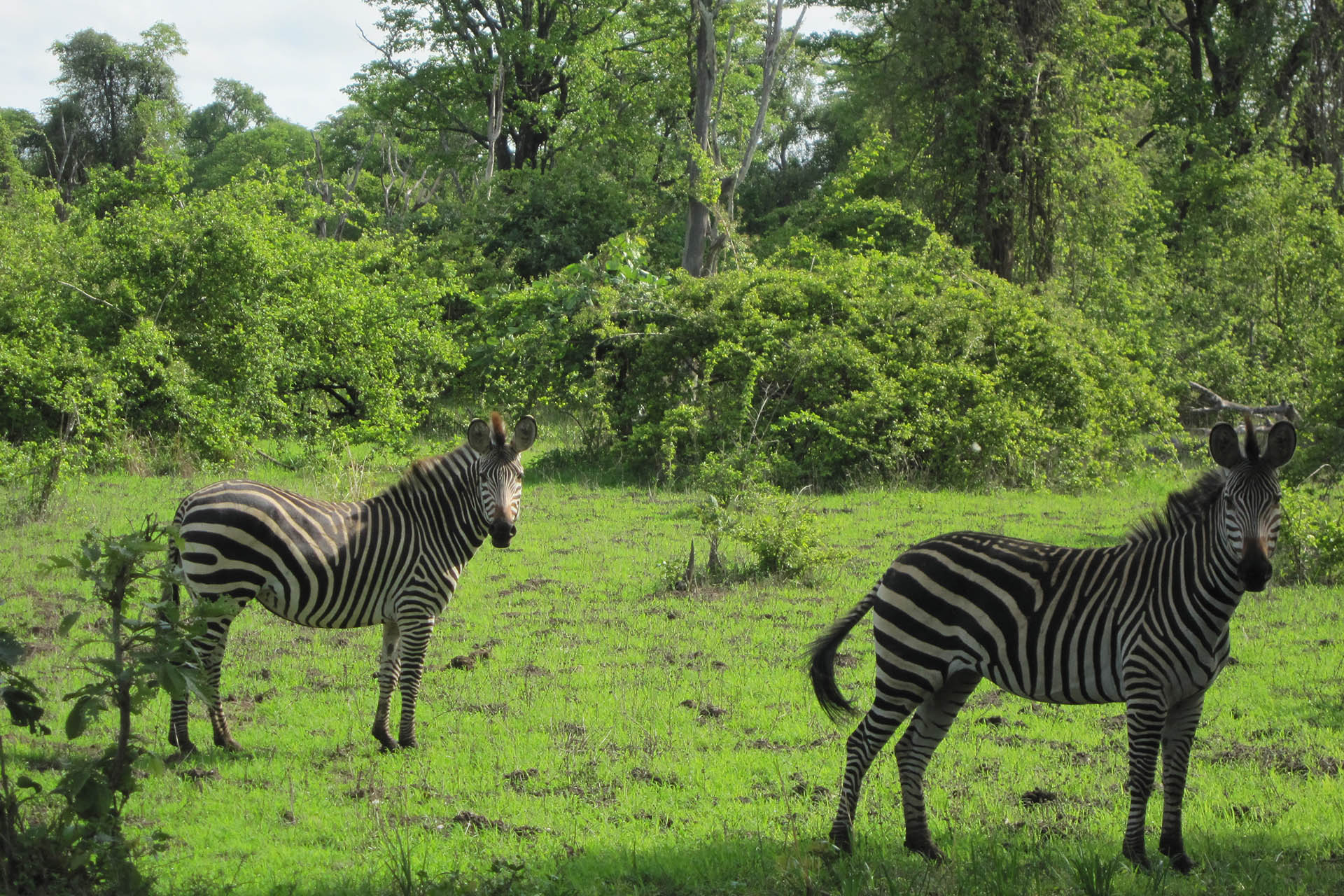 our destinations zambia-national-parks-malawian-style-malawi-adventures-experiences-specialist-tour-operator-zebra