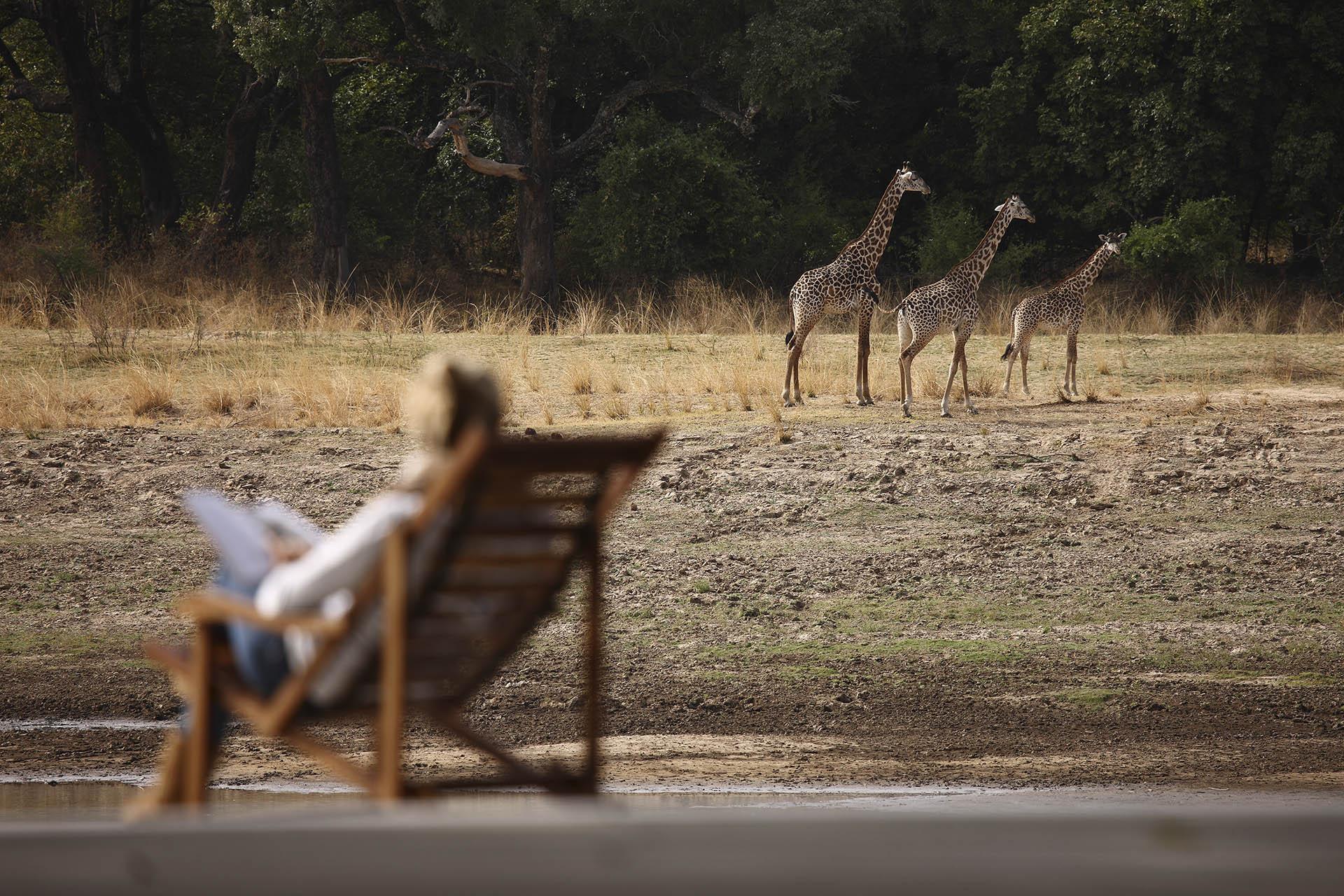 south luangwa national park tours-northern-explorer-15-nights-bush-beach-safaris-tours-malawi-adventures-experiences-holidays-specialist-tour-operator-chinzombo-giraffe