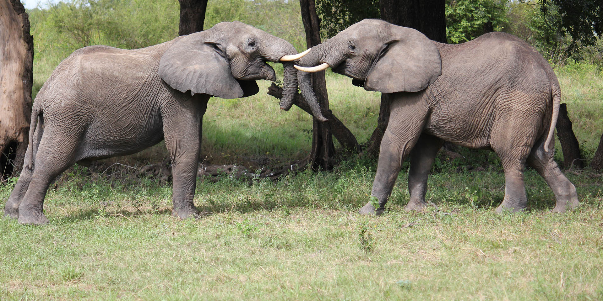 south luangwa national park zambia-national-parks-malawian-style-malawi-adventures-experiences-specialist-tour-operator-elephants-landscape