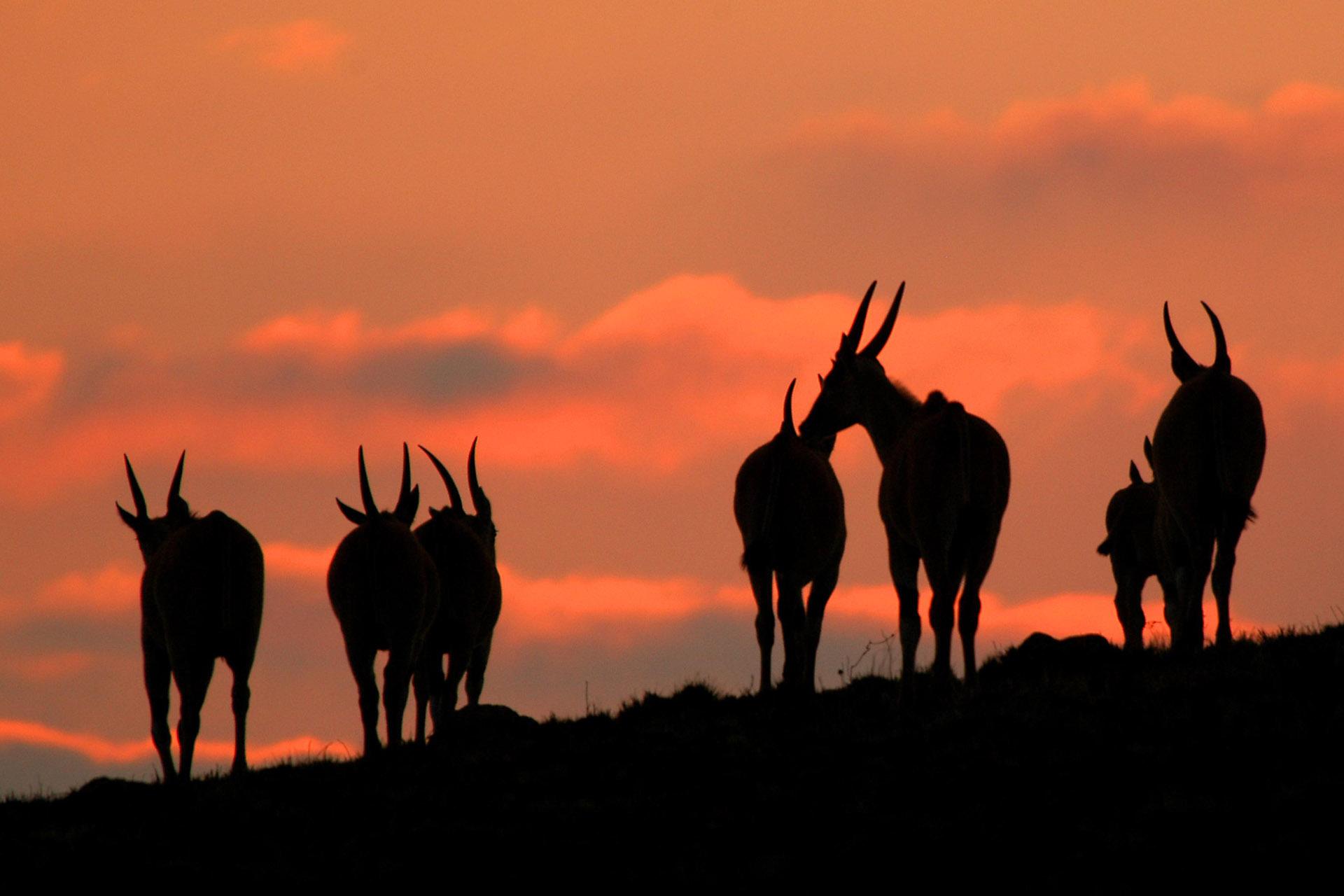 sustainable tourism malawian-style-malawi-adventures-experiences-specialist-tour-operator-chelinda-lodge-wildlife