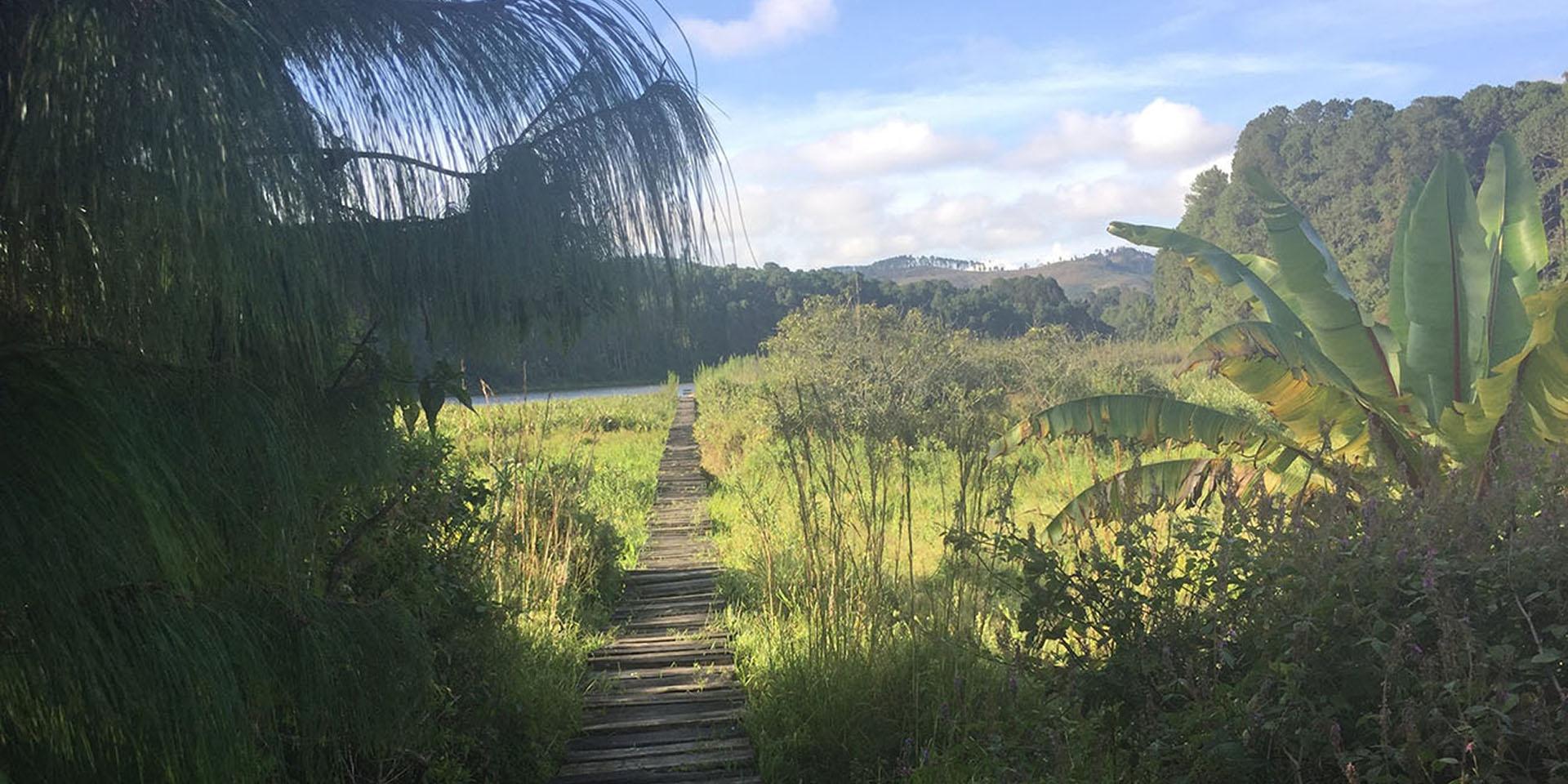 viphya plateau tours malawian-style-malawi-adventures-experiences-specialist-tour-operator-luwawa-forest-lodge-walkway