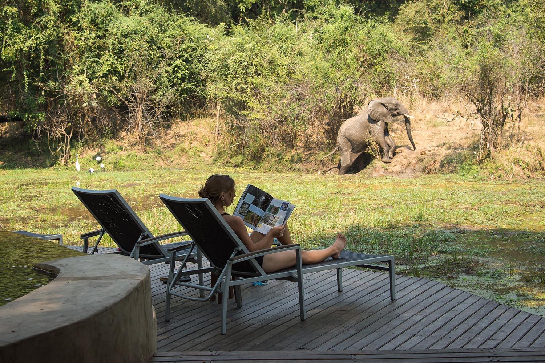 womens-trip-karen-loftus-tours-safaris-malawian-style-malawi-adventures-experiences-holidays-specialist-tour-operator-nkwali-camp-south-luangwa-deck-elephant