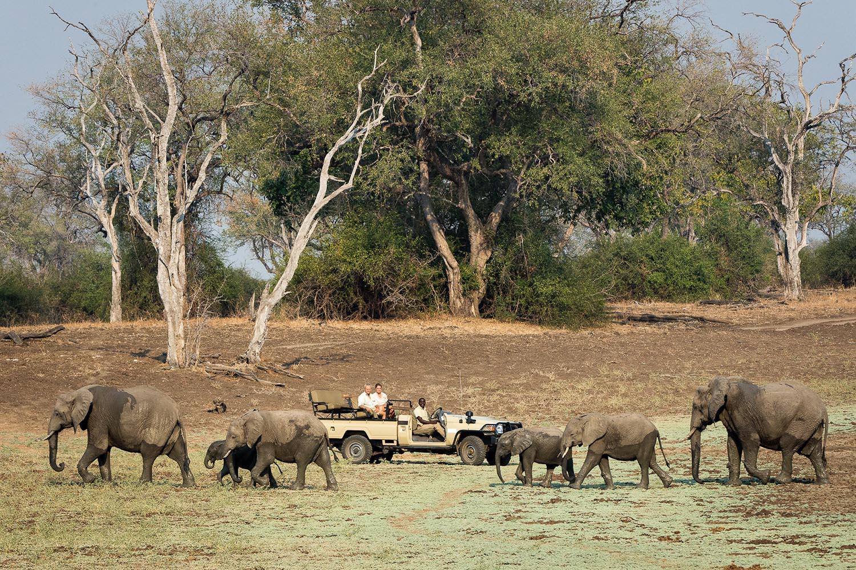 womens-trip-karen-loftus-tours-safaris-malawian-style-malawi-adventures-experiences-holidays-specialist-tour-operator-nkwali-camp-south-luangwa-game-drive-elephants-landscape