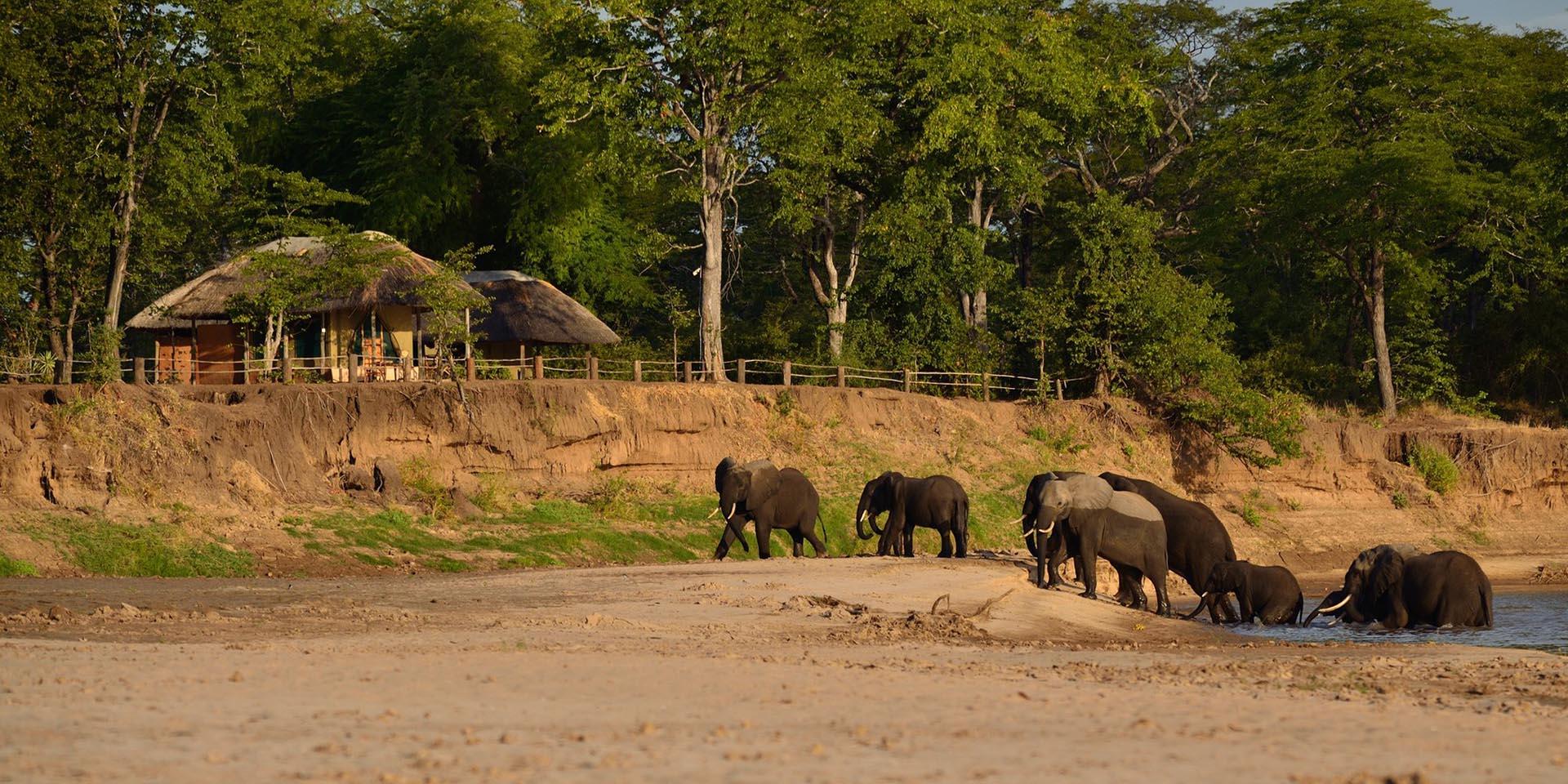 zambia bush-beach-safaris-tours-malawian-style-malawi-adventures-experiences-specialist-tour-operator-wildlife-camp-south-luangwa-elephants-walking
