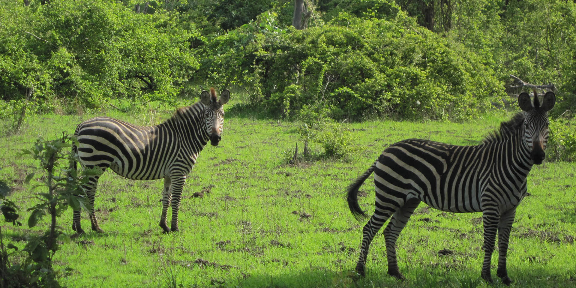 zambia national parks malawian-style-malawi-adventures-experiences-specialist-tour-operator-zebra-landscape