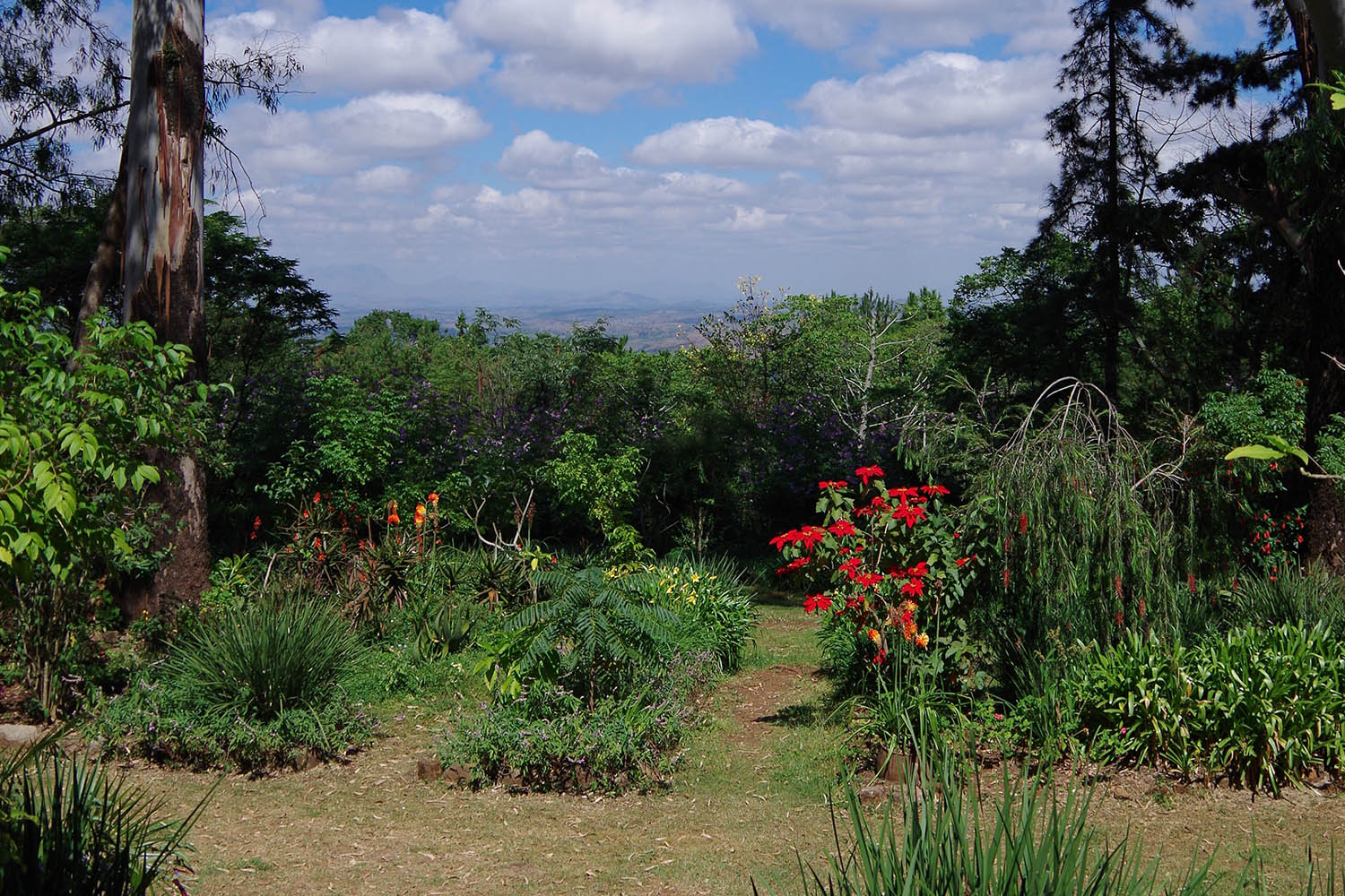 zomba plateau tours-malawian-style-malawi-adventures-experiences-specialist-tour-operator-landscape-views-garden