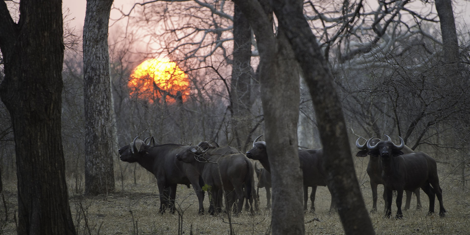 majete wildlife reserve malawi-national-parks-reserves-malawian-style-malawi-adventures-experiences-specialist-tour-operator-majete-wildlife