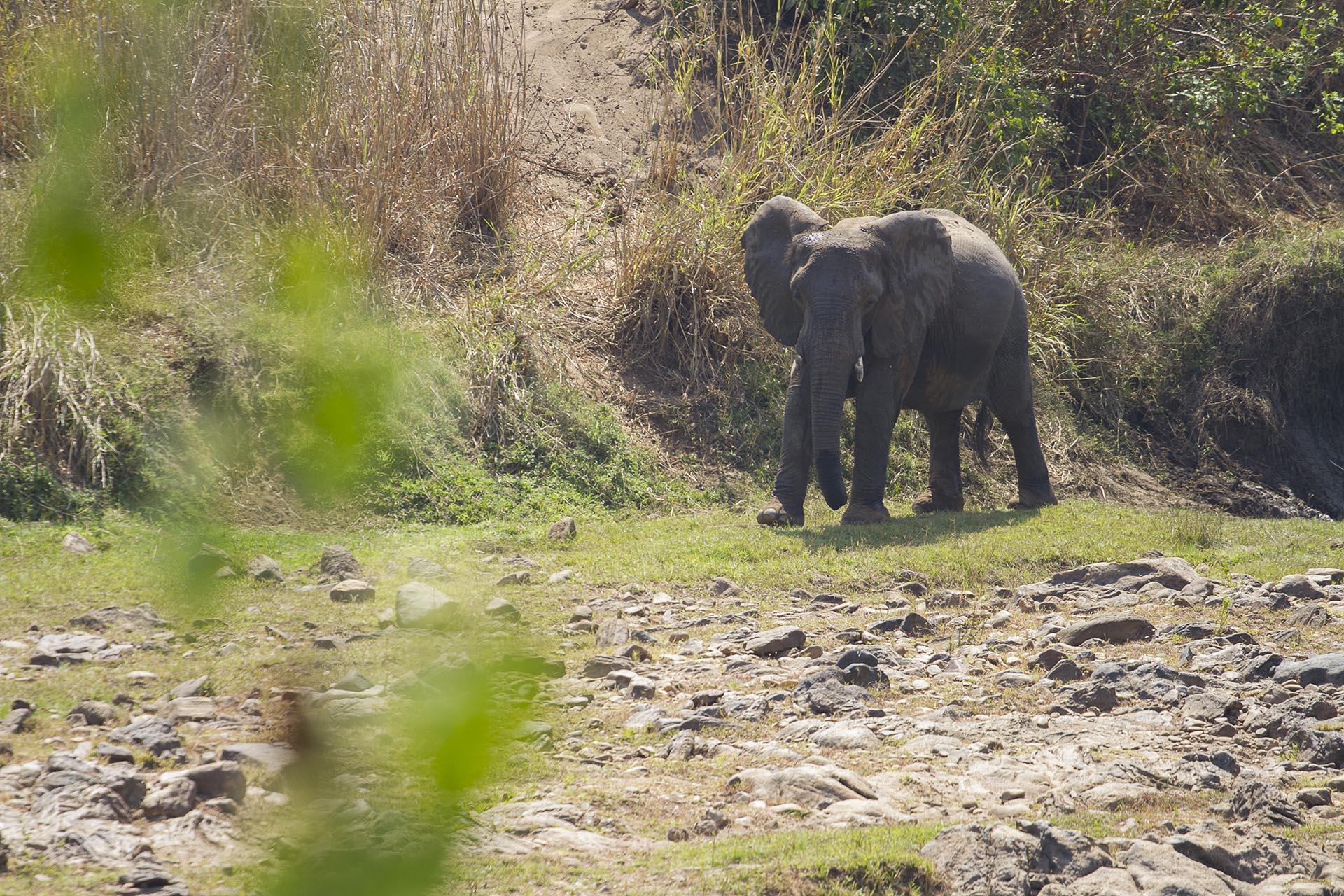 malawi national parks nkhotakota-wildlife-reserve-reserves-malawian-style-malawi-adventures-experiences-specialist-tour-operator-elephant-malawi-safari