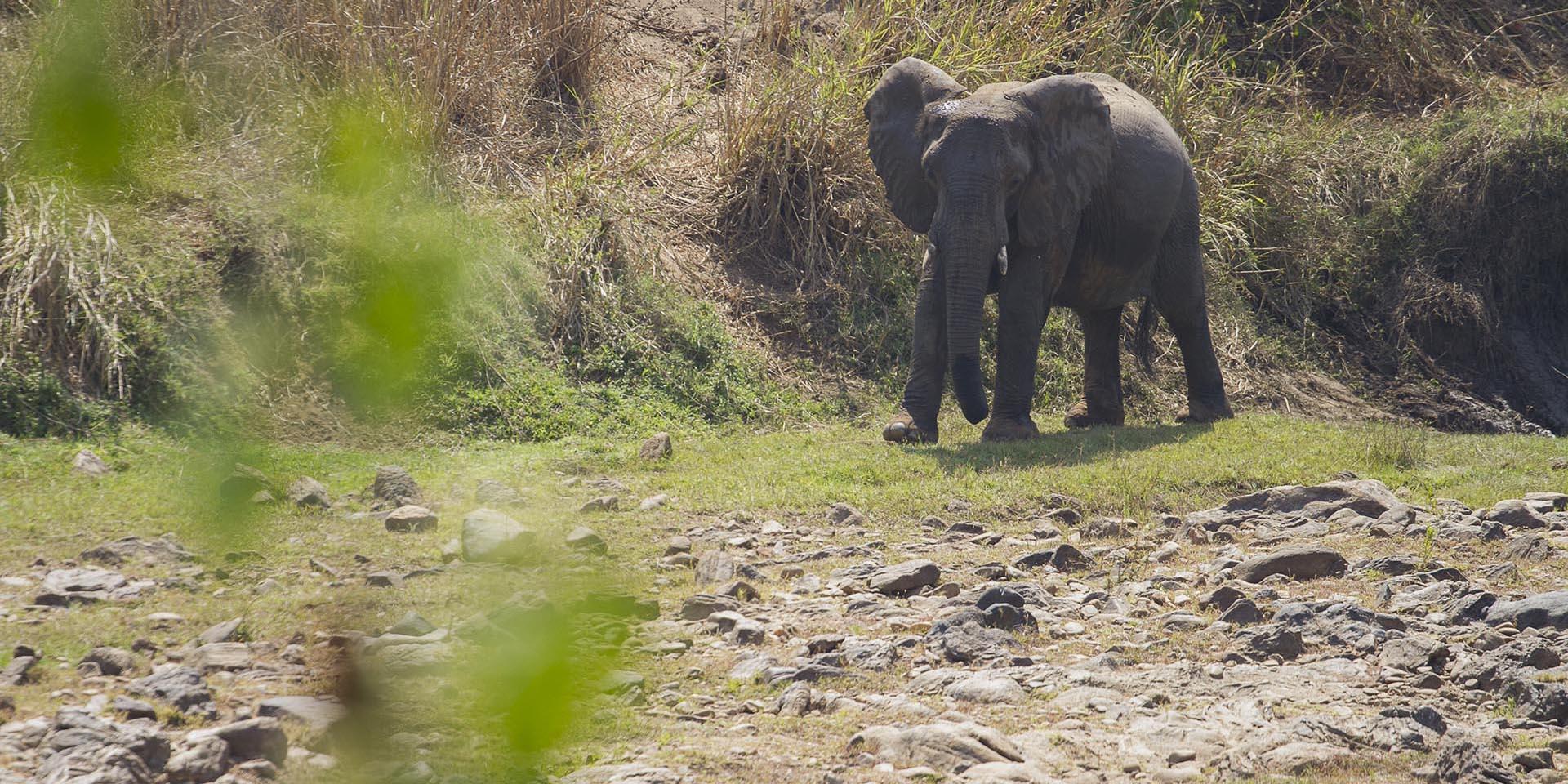 nkhotakota wildlife reserve malawi-national-parks-reserves-malawian-style-malawi-adventures-experiences-specialist-tour-operator-elephant-malawi-safaris-river