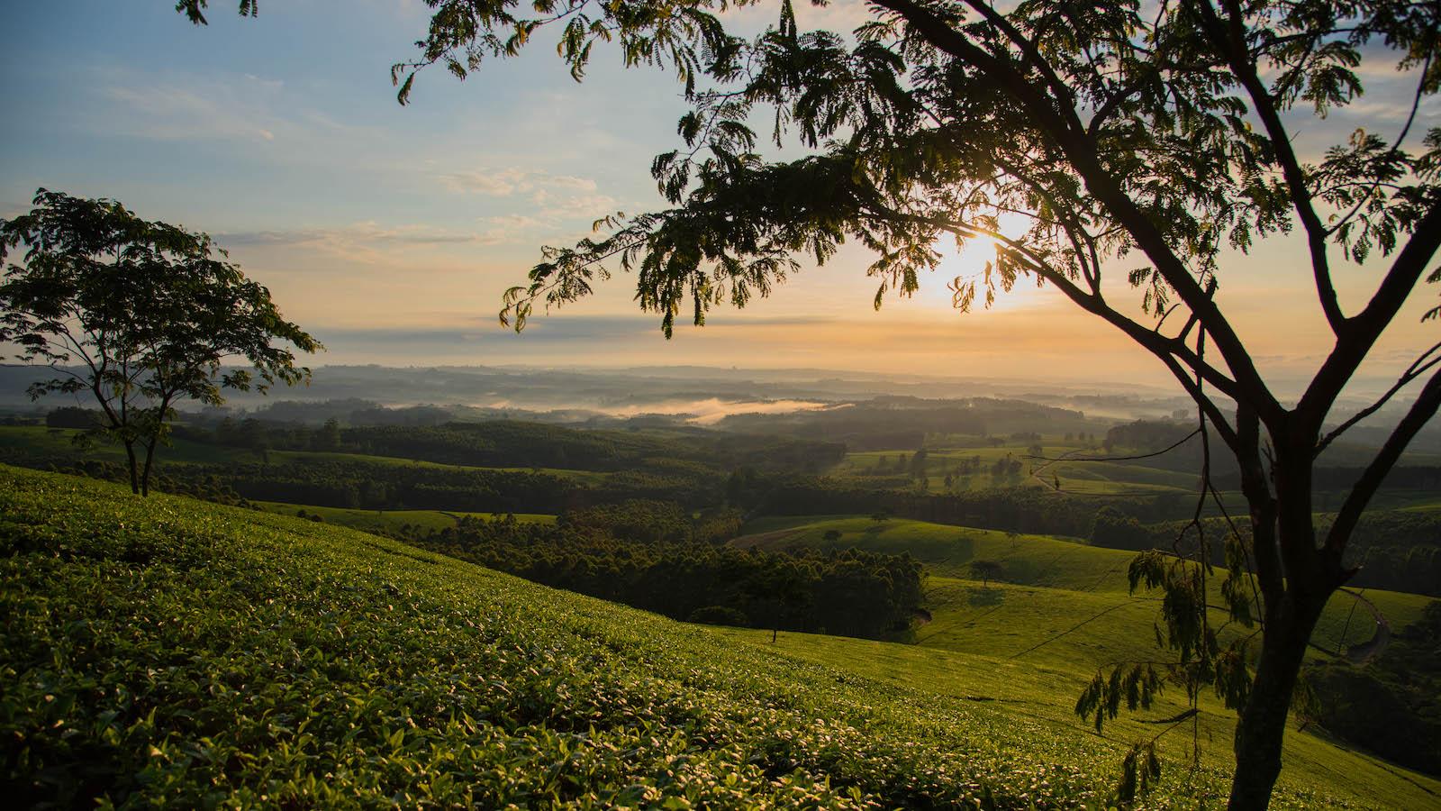 huntingdon, satemwa view