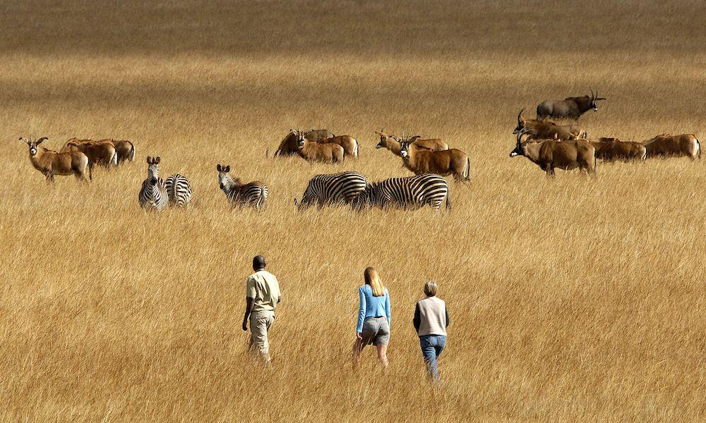 nyika plateau wildlife