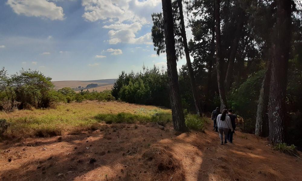 walk around nyika forest