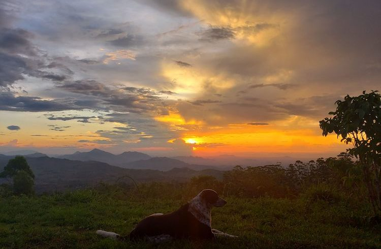 zomba sunset dog