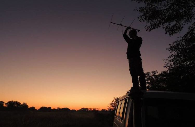 tracking wildlife in lilongwe at sunrise