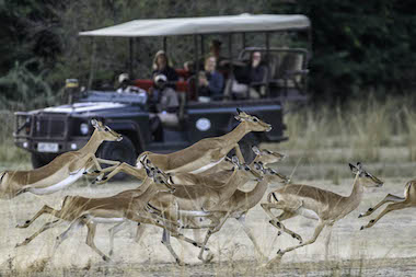 imapala and safari vehicle, africa