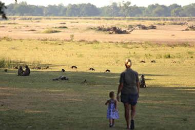 meerkats and monkeys, south luangwa