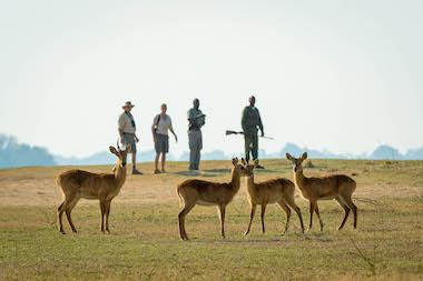 safari in south luangwa
