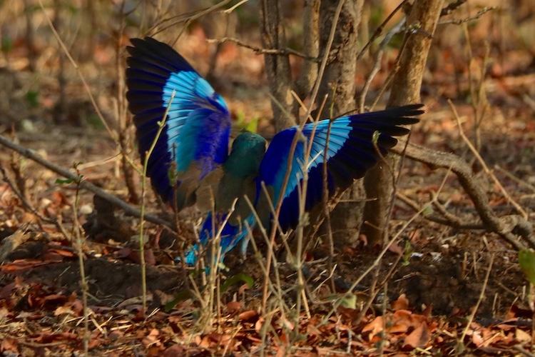birdlife during off season africa